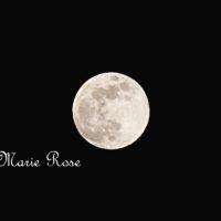 Flower Moon フラワームーン